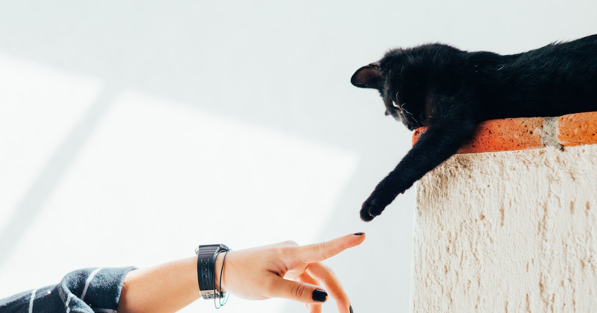 Cats communicate with the help of bacteria living in their butts