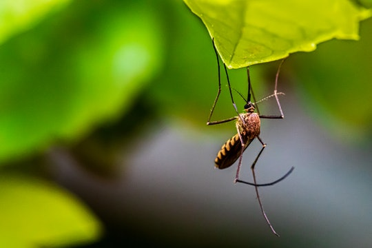 close up of a mosquito perched on a leaf