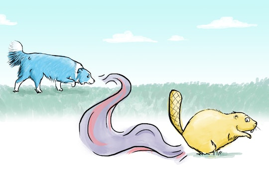 A drawing of a dog tracking a beaver by the scent wafting from a beaver's butt