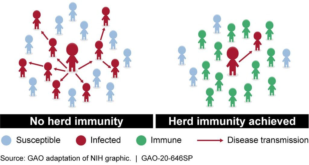 graphic showing the difference between disease transmission when there is herd immunity versus without it