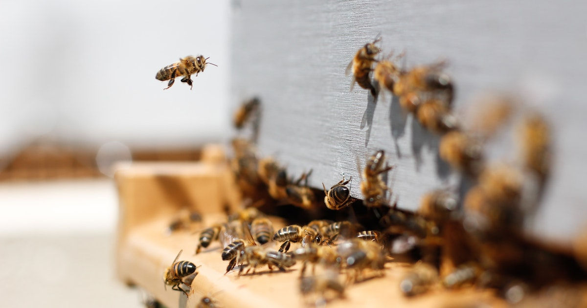 Sick bees social distance, but only within their own colony