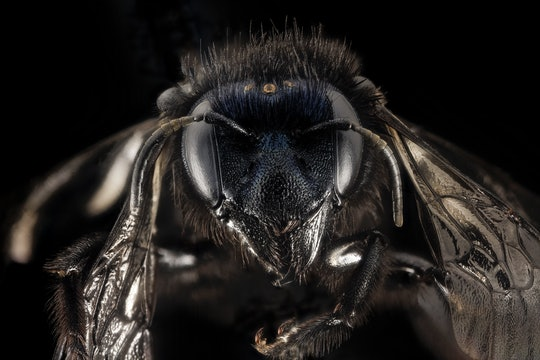 a close up of a bee's face against a black background