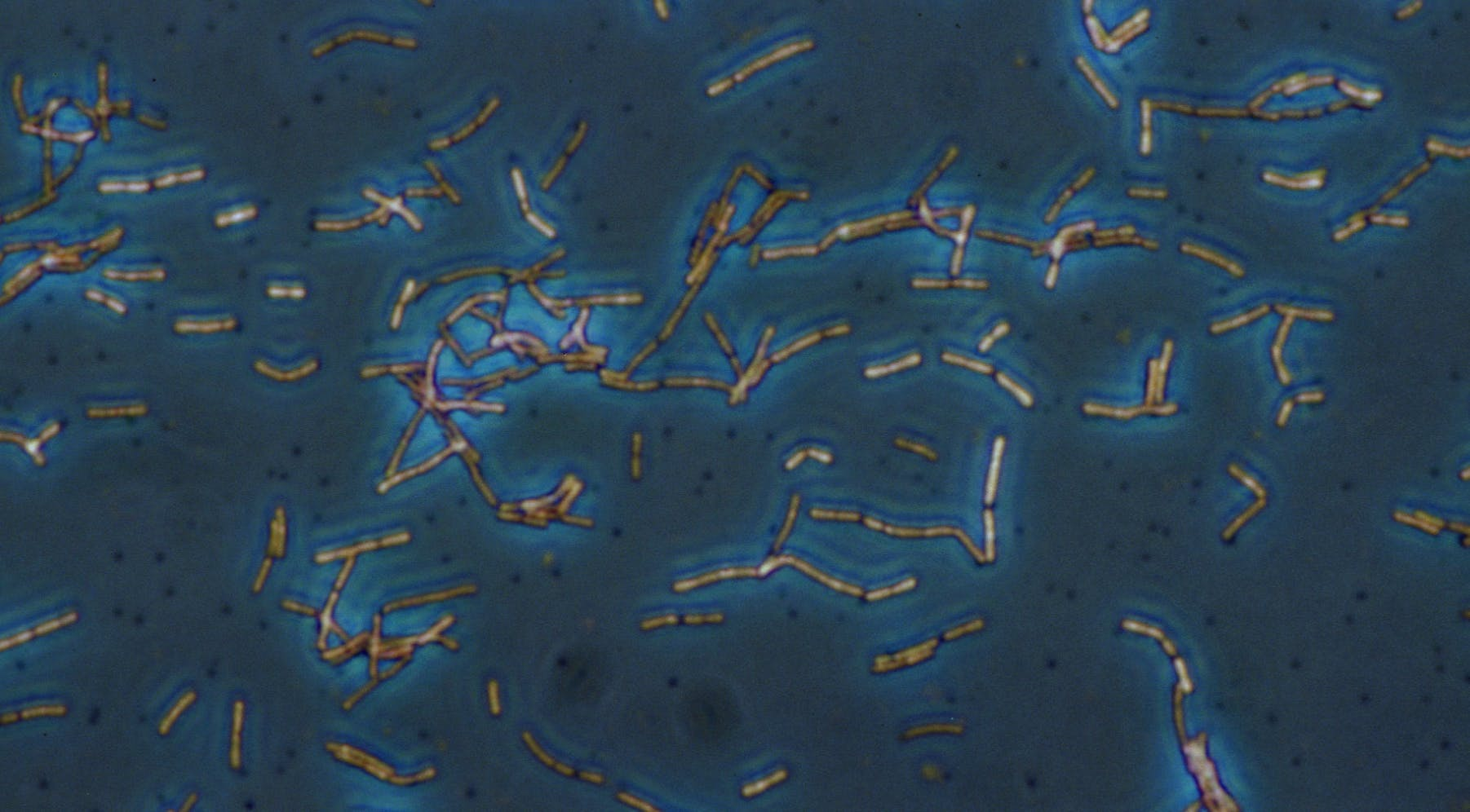 microbes on a blue background