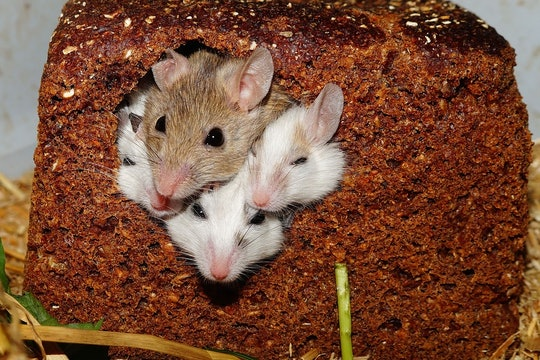 a group of cute mice