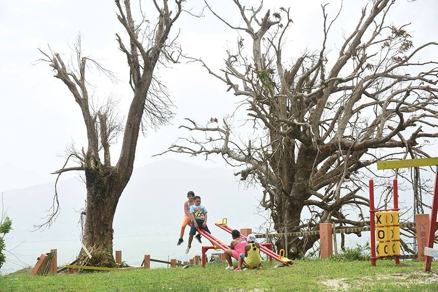 Children in Puerto Rico playing on a playground surrounded by trees broken by Hurricane Maria.