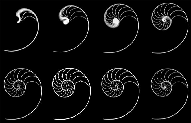 Nautilus shell sections