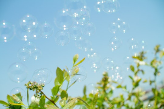 bubbles floating over plants