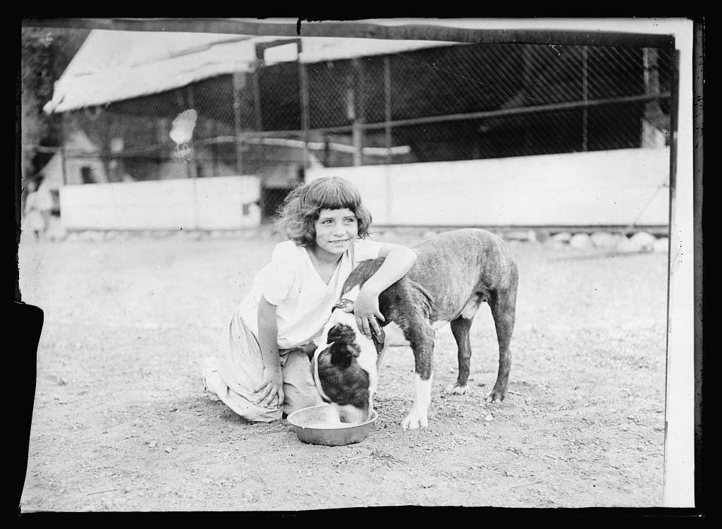A small camper, age 8-10, playing with a dog