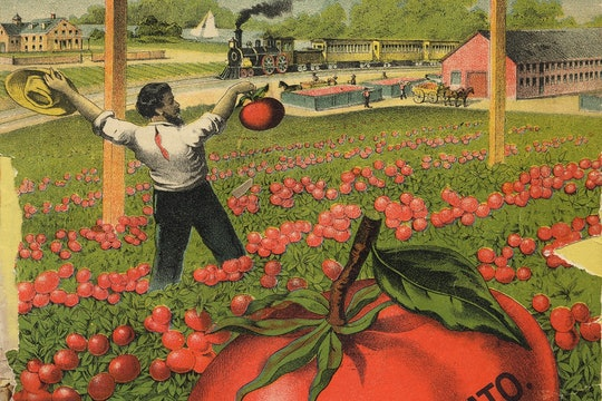tomato advertisement