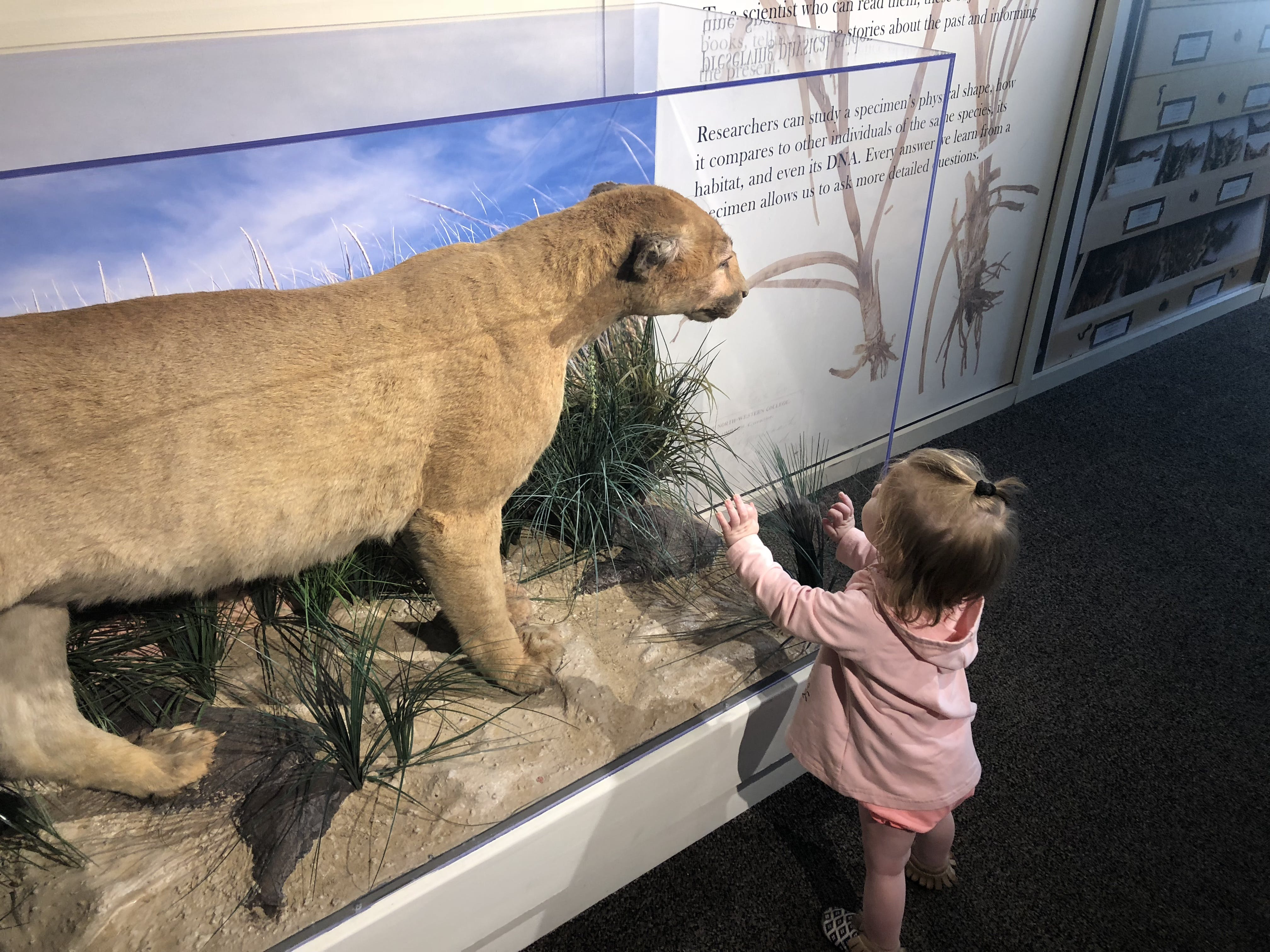 Child looking at nature exhibit during a summer trip, Peggy Notebaert Nature Museum