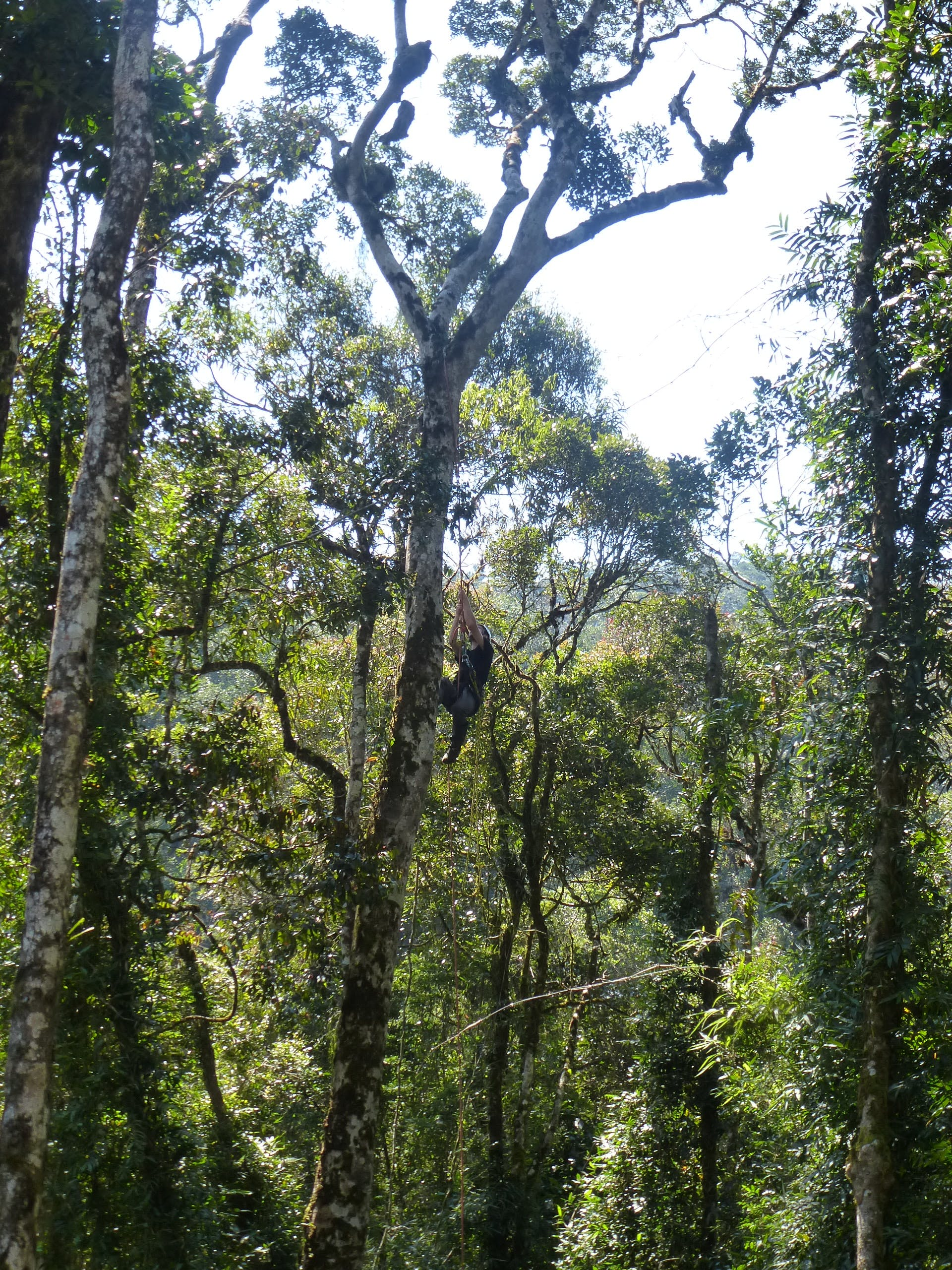 a man climbing a tropical tree