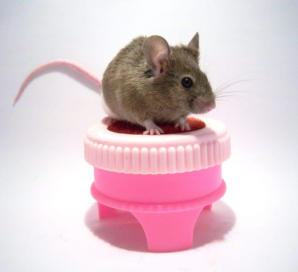 a mouse sitting on top of a pink object against a blank background