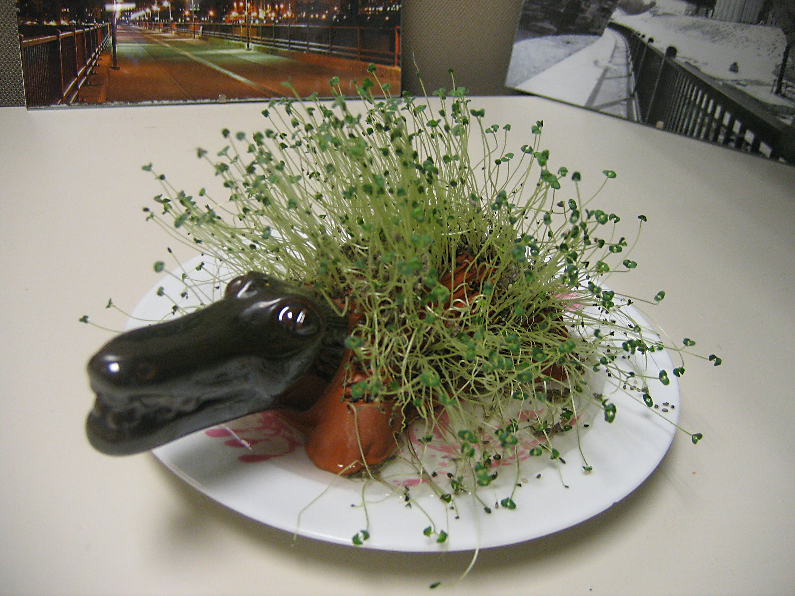A chia pet shaped like an alligator, with sprouts growing all over.