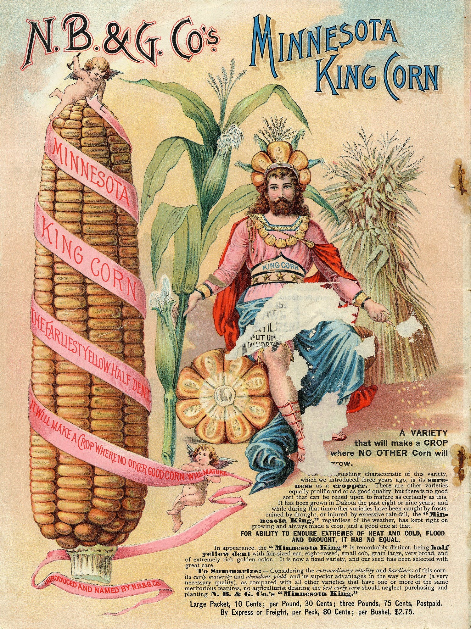 king next to corn, seed catalog image