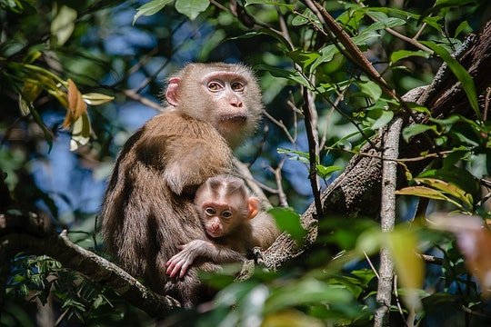 a mother and baby monkey high up in a tree