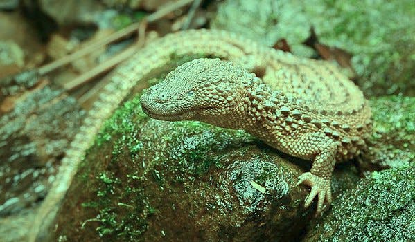 picture of a lizard/reptile on a rock, with a green tint