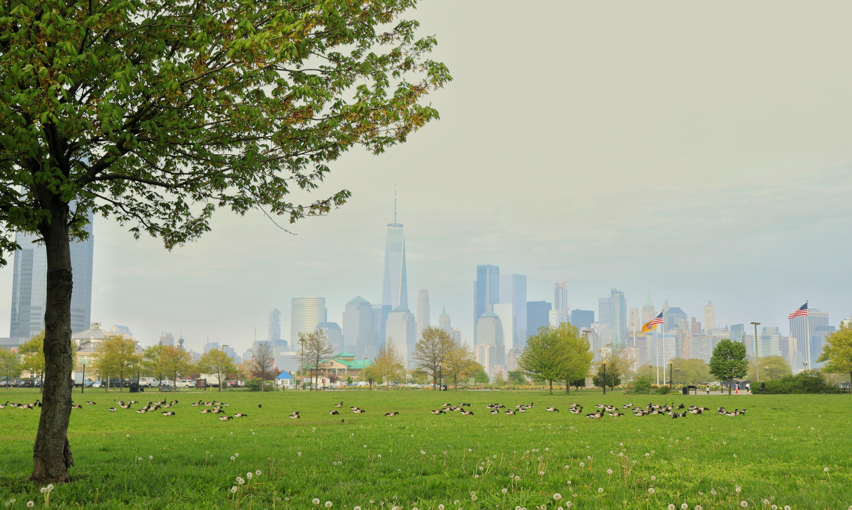 a park with a city skyline behind it