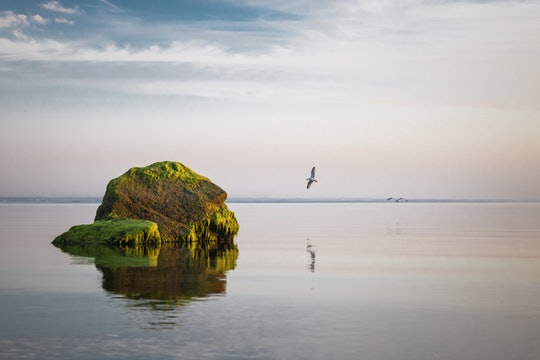 a bird flying to a small rock island