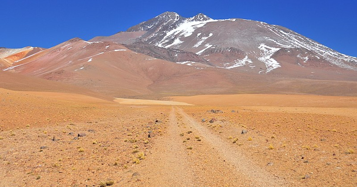 World's highest-dwelling mammal discovered on top of a Chilean volcano