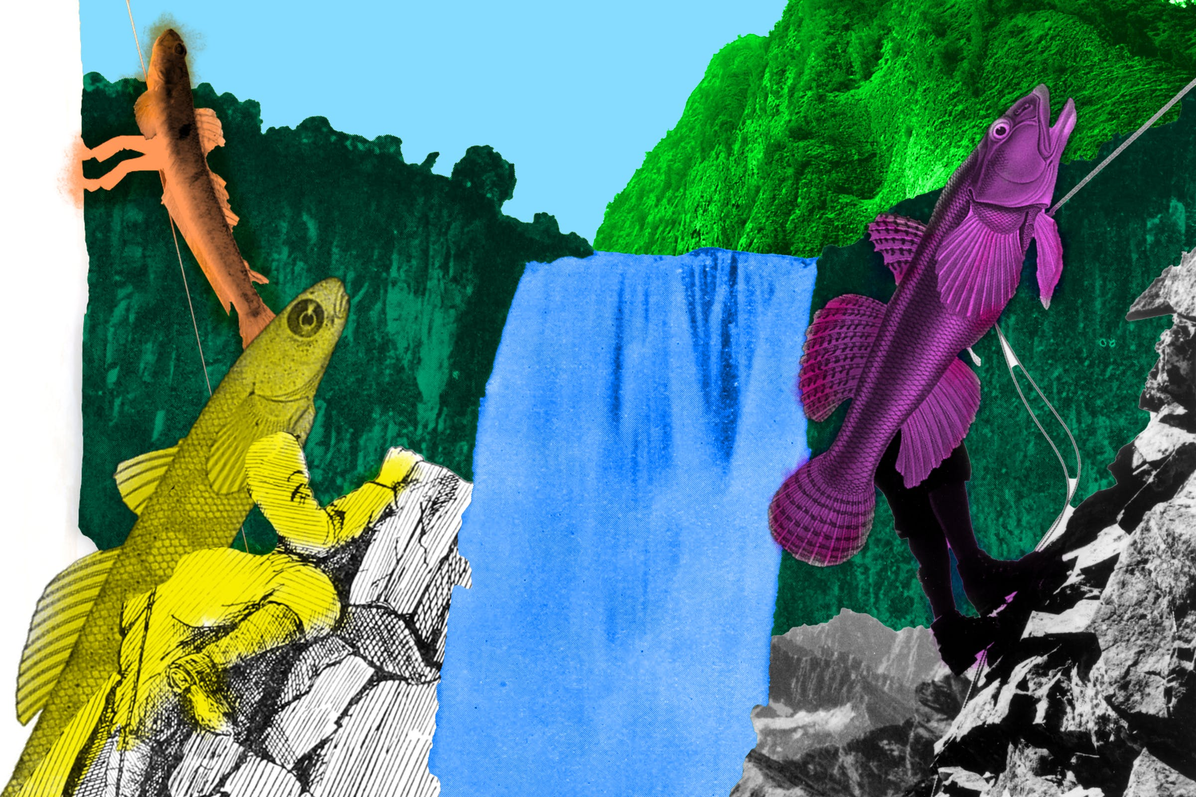 A bunch of goofy looking fish are trying to climb a waterfall using mountain climbing gear.