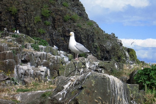a sea bird standing on rocks stained with poop