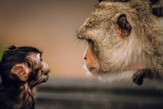 an adult and child monkey looking at each other