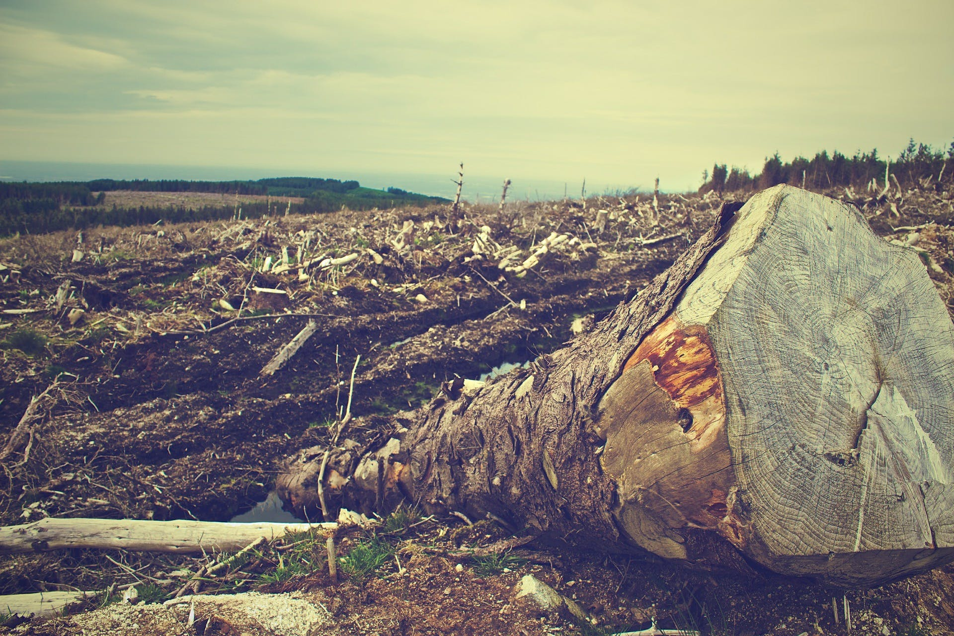 Deforestation with close up log