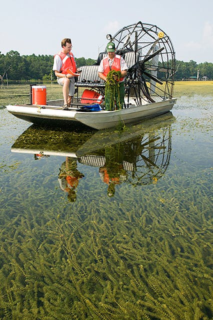 Army Corps of Engineers collect herbicide-resistant hydrilla from Lake Seminole in northern Florid using an airboat.