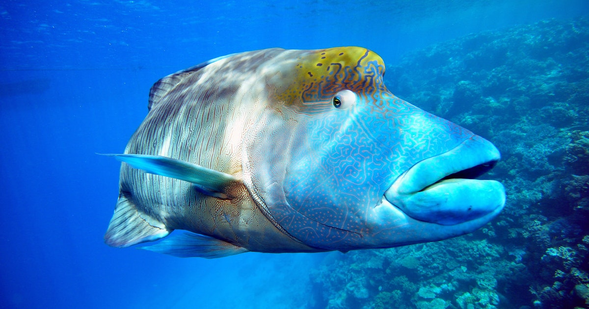 Researchers develop an app for tracking trade of endangered fish