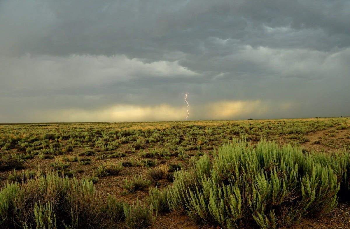 a sea of sagebrush plants with lightning striking in the background