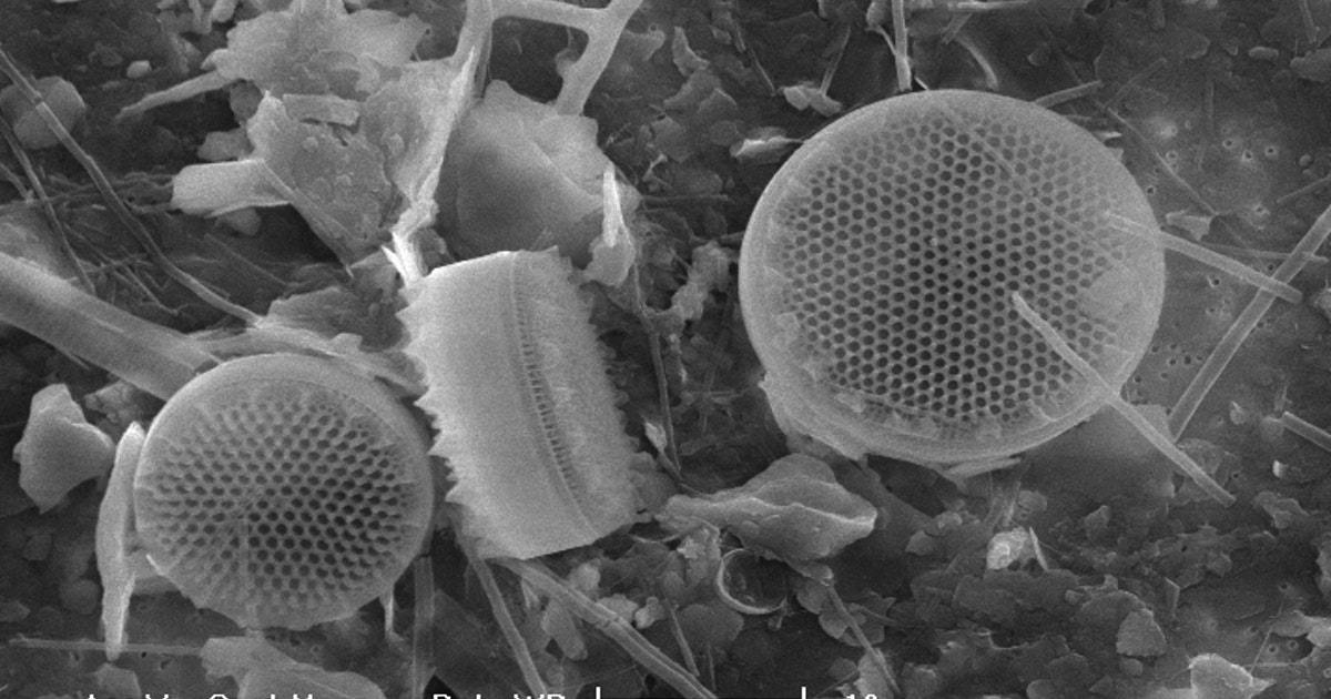 Unlike bacteria, diatoms are picky about microplastics