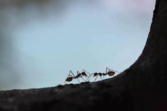 two ants in shadow on tree