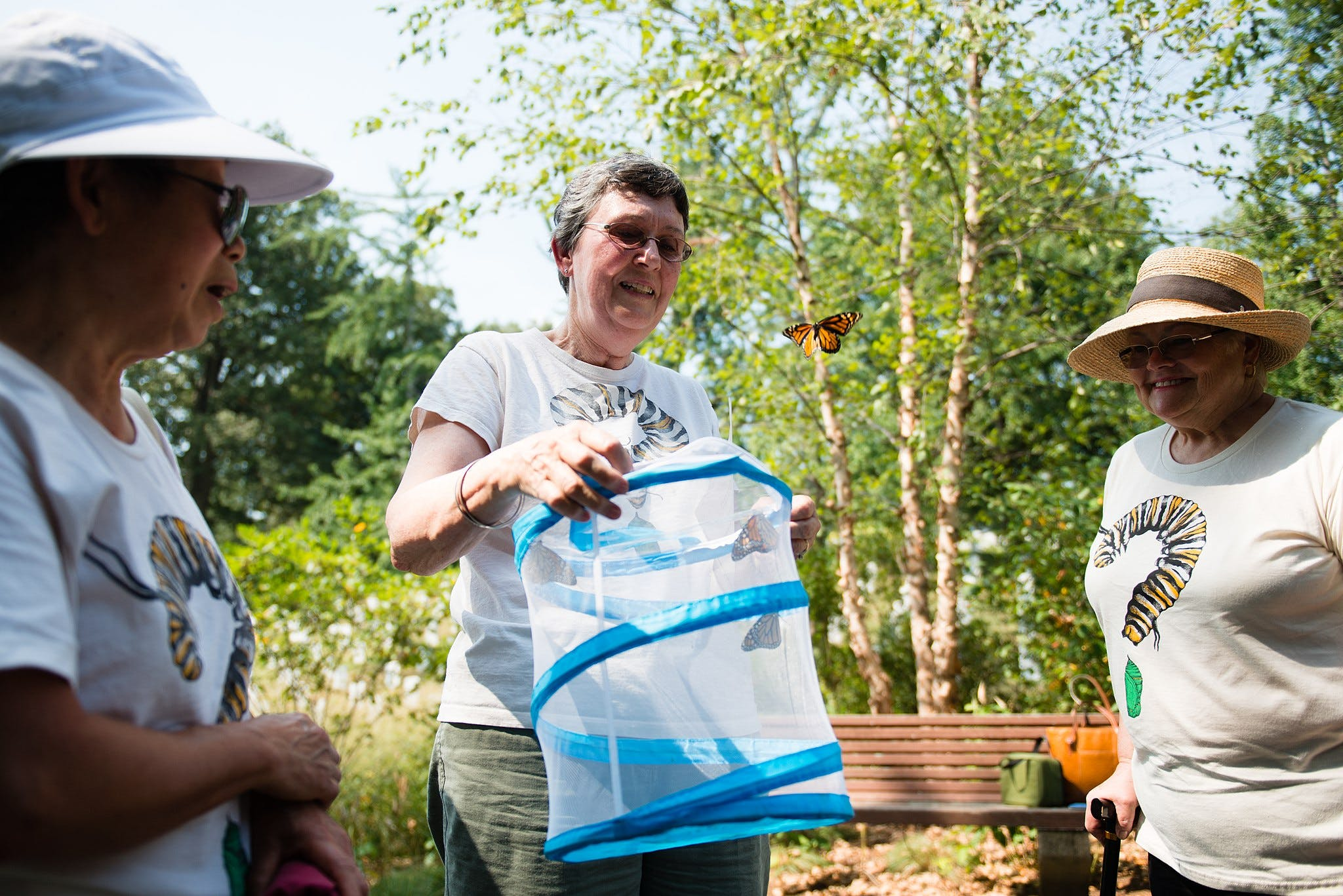 A monarch butterfly released in Arlington National Cemetery by volunteers with Monarch Teacher Network, Sept. 1, 2015, in Arlington, VA