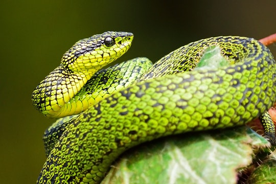 Green snake on branch
