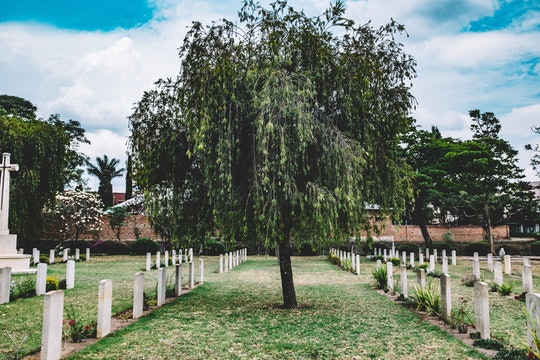 a cemetery with a large tree in the middle
