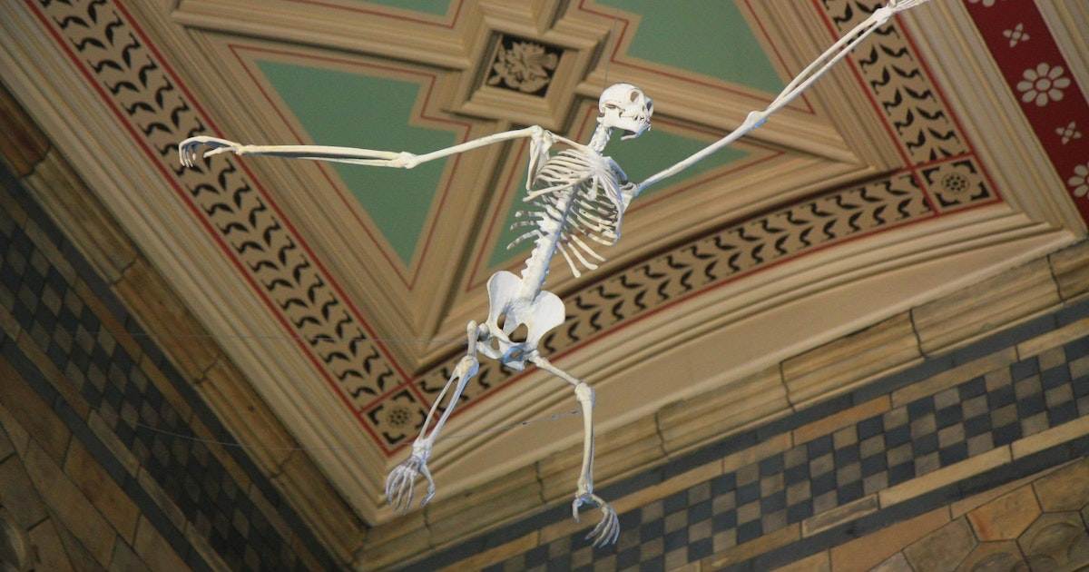 How did our ancestors start walking upright?