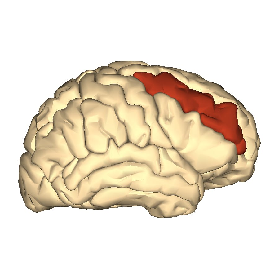 an image of the brain with an area in the center highlighted in red