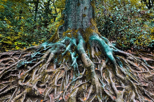 a tree with extensive roots spreading across the ground