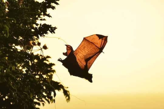 a bat flying out of a tree at dusk