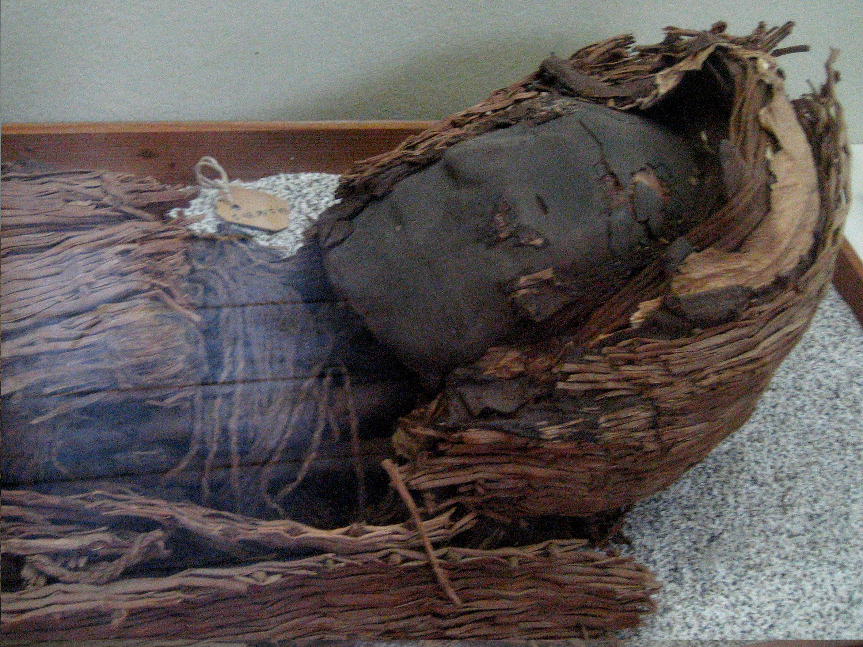 A mummy of the Chinchorro people, with blackened skin laying in a woven basket.