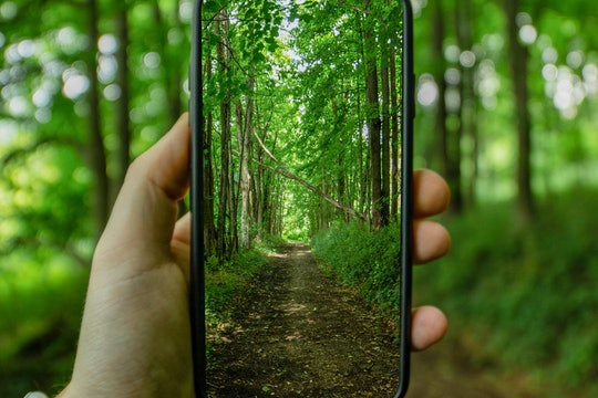 A green forest is seen through a cell phone held in a person's hand.