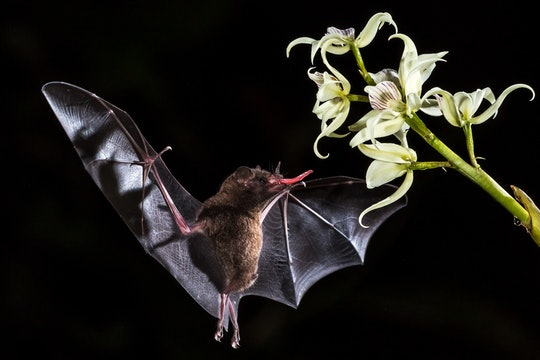 A bat flying close to a flower.