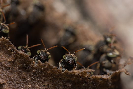 a group of ants peeking up from the ground or a log