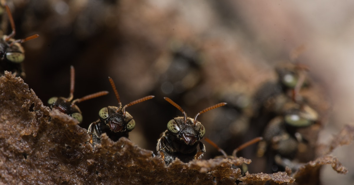 Ant activity has outsize impacts on soil moisture and plant growth