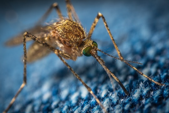 a close-up photograph of a mosquito on blue fabric
