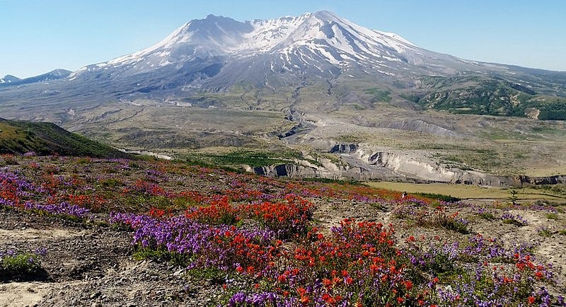 wildflowers in the foreground with the mountain in the background