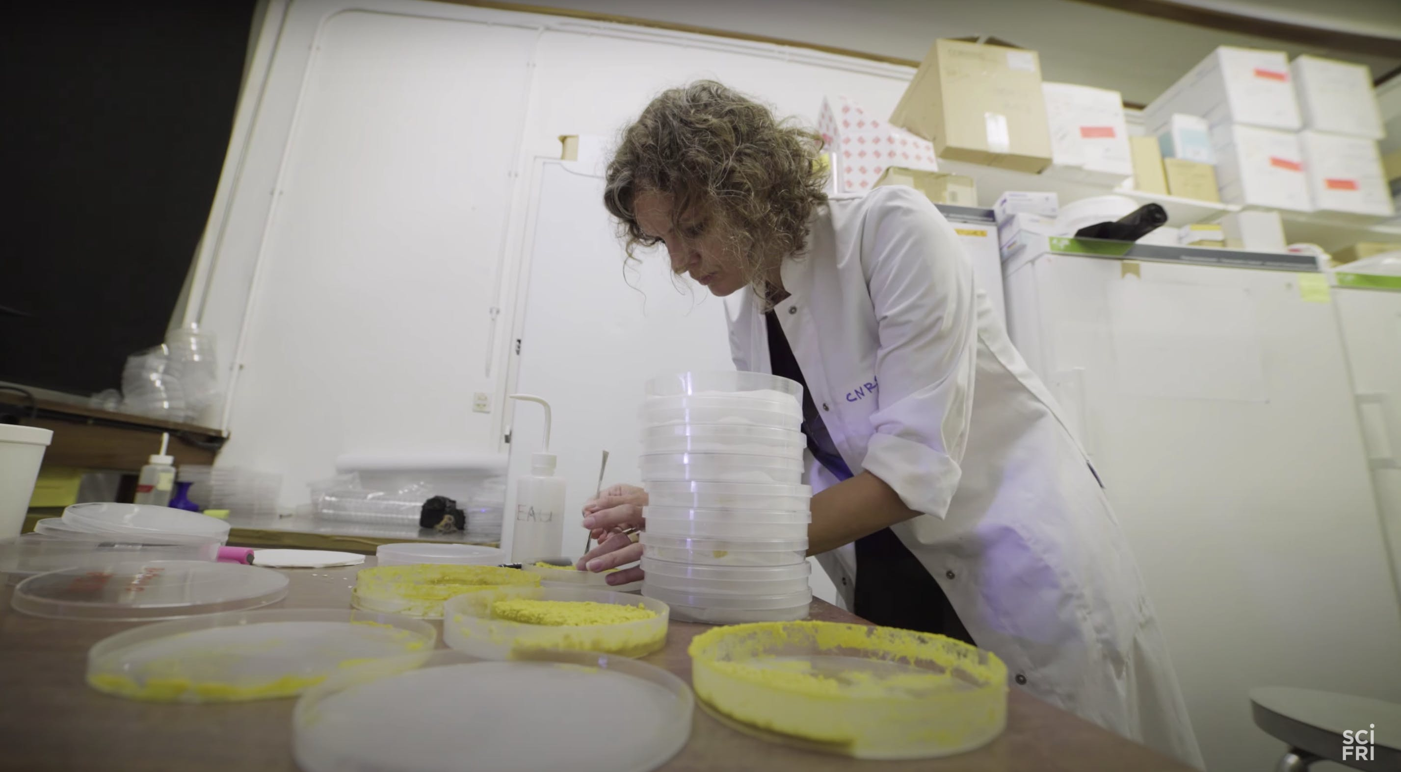 Audrey Dussutour setting up a slime mold experiment