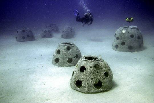 """A new graveyard of """"Reef Balls"""" with a diver"""