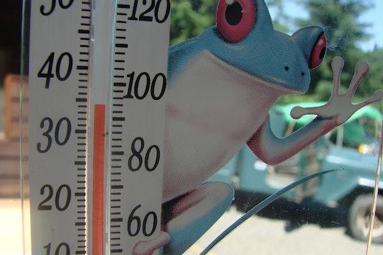 Reptiles feel the heat