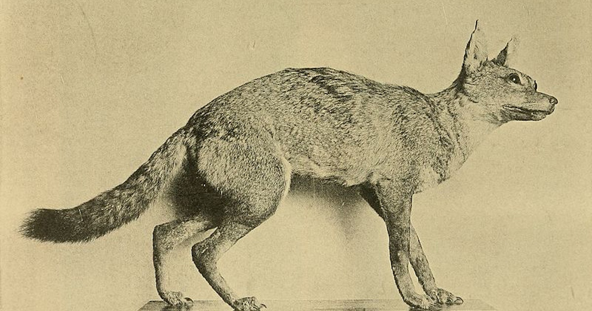 How a mislabeled wolf skull spurred an erroneous scientific conclusion